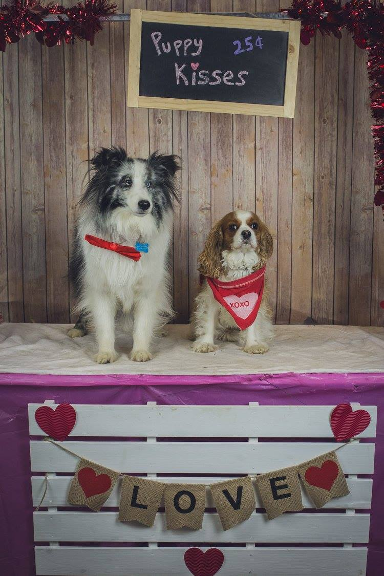 Pampered 4 Paws valentines