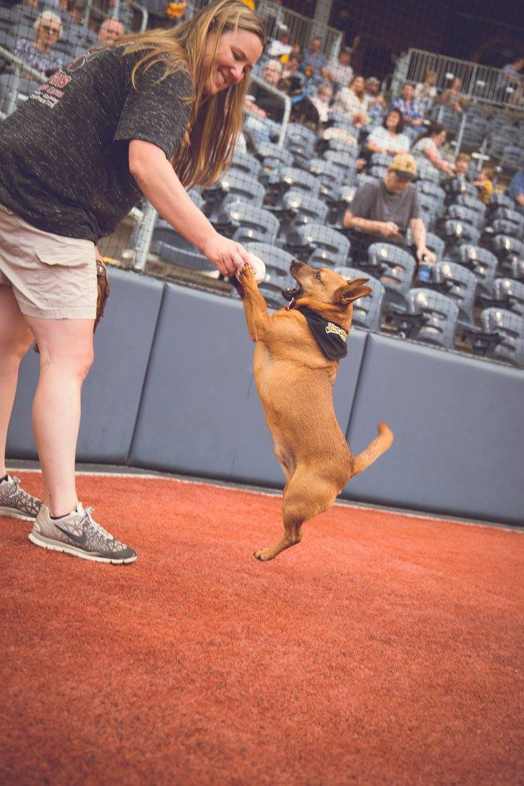 WV Bark in the Park