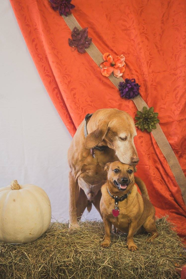 Fall pics at dog school