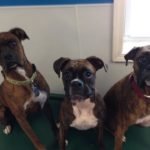 Daycare dog friends
