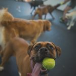 Morgantown, WV doggie daycare