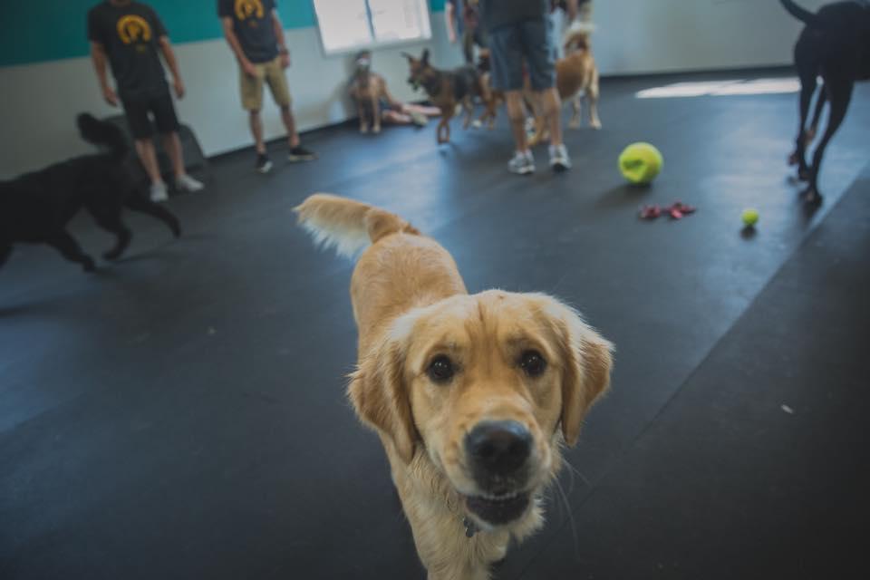 Doggie daycare in Morgantown