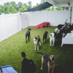Morgantown doggie daycare