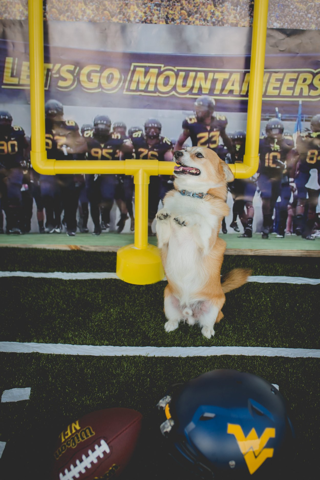 WVU football ready at Pampered 4 Paws